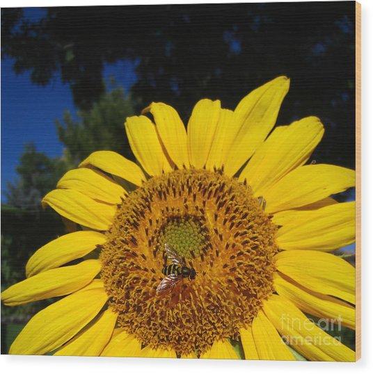 Sunflower Visitor Series 4 Wood Print
