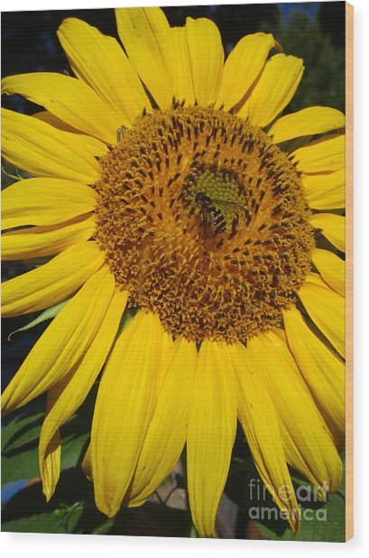 Sunflower Visitor Series 5 Wood Print