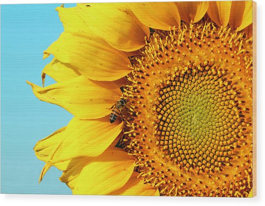 Sunflower With Bee - Photo Wood Print