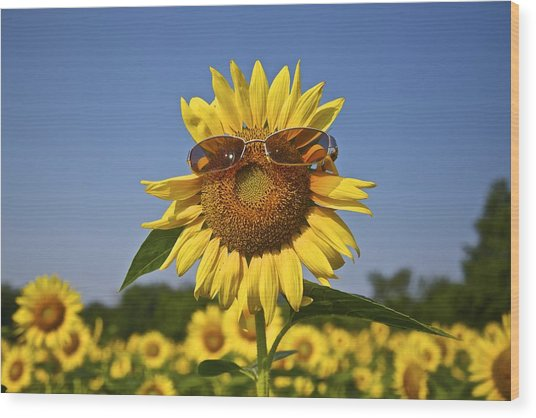 Sunflower With Sunglasses Wood Print