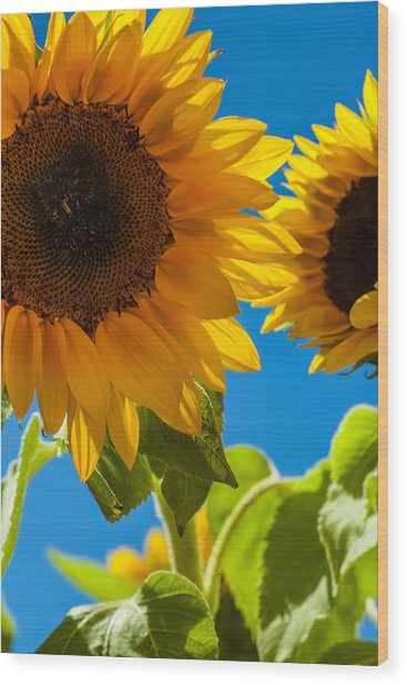 Sunflowers 2 Wood Print by Dasmin Niriella