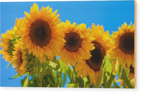 Sunflowers 3 Wood Print by Dasmin Niriella