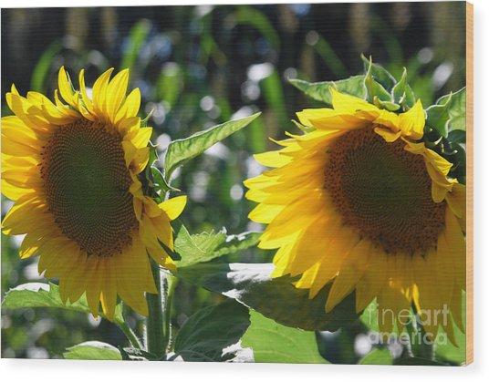 Sunflowers Wood Print by Manda Renee