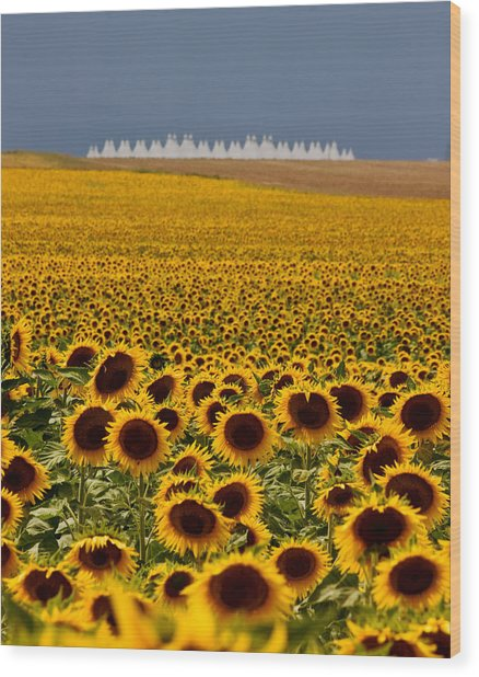 Sunflowers And Airports Wood Print