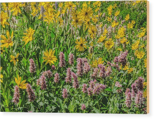 Sunflowers And Horsemint Wood Print