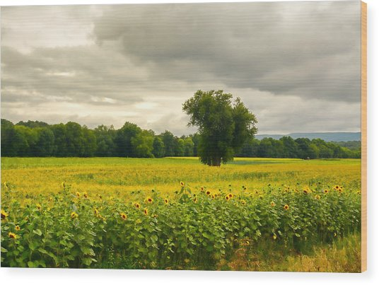 Sunflowers And The Tree Wood Print