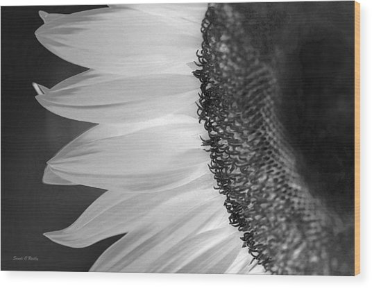 Sunflowers Beauty Black And White Wood Print