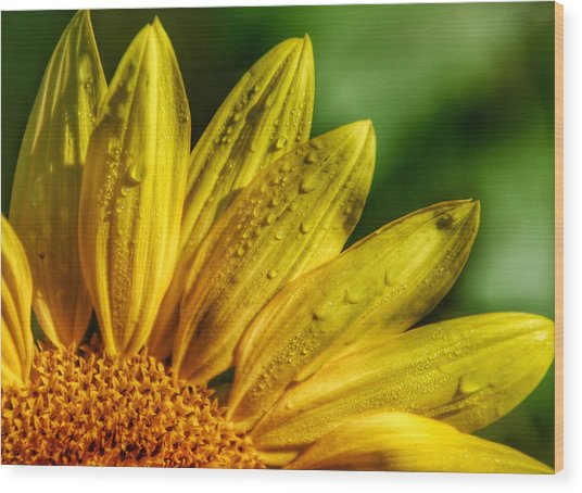 Sunflowers I Wood Print by Kathi Isserman