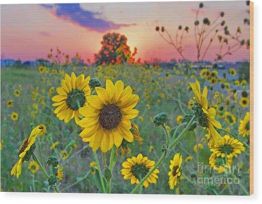 Sunflowers Sunset Wood Print