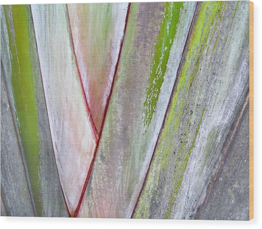 Sunken Gardens Abstract 4 Wood Print