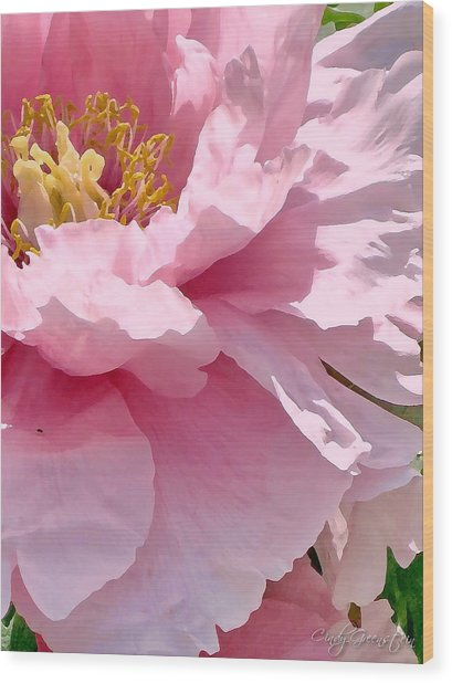 Sunkissed Peonies 1 Wood Print