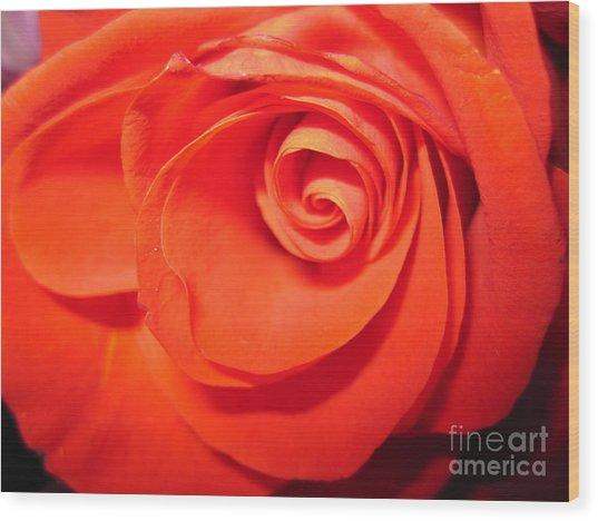 Sunkissed Orange Rose 9 Wood Print