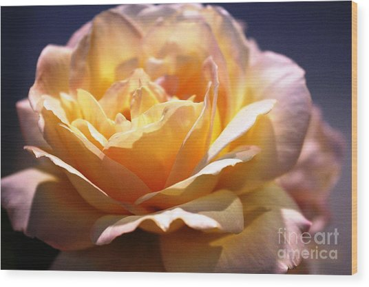 Sunkissed Rose Wood Print by Judy Palkimas