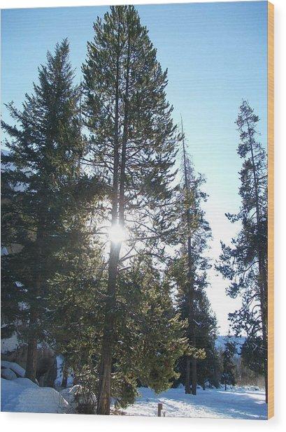 Sunlight Through A Tree Wood Print