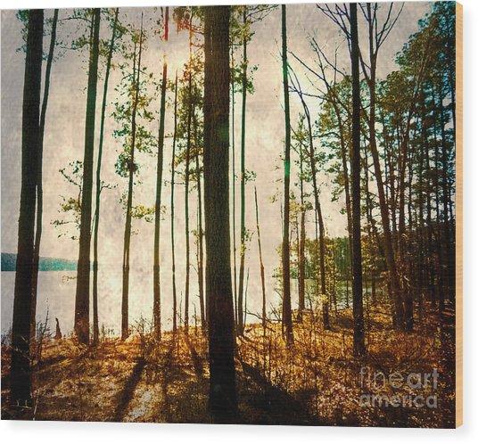 Sunlight Through The Trees Wood Print