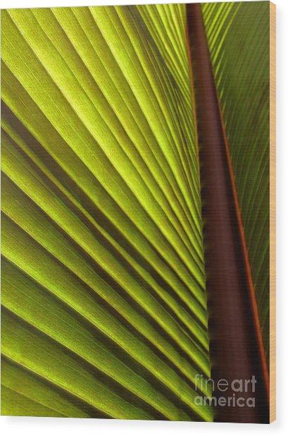 Sunlit Leaf Wood Print