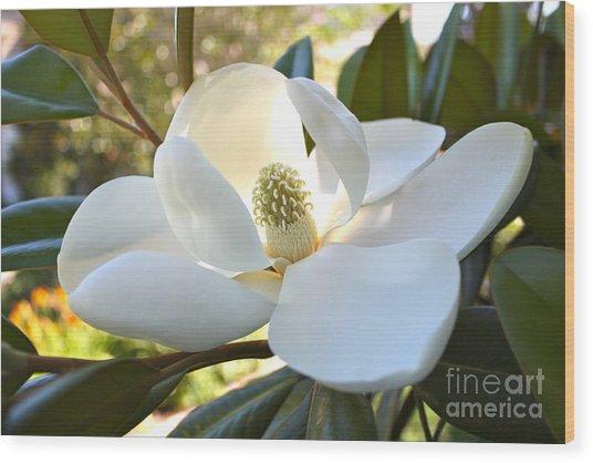 Sunlit Southern Magnolia Wood Print