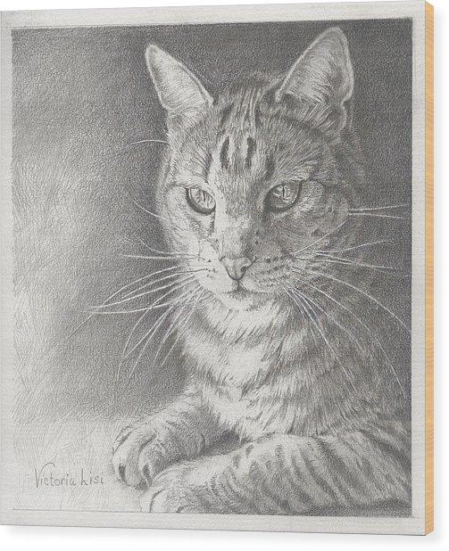 Sunlit Tabby Cat Wood Print
