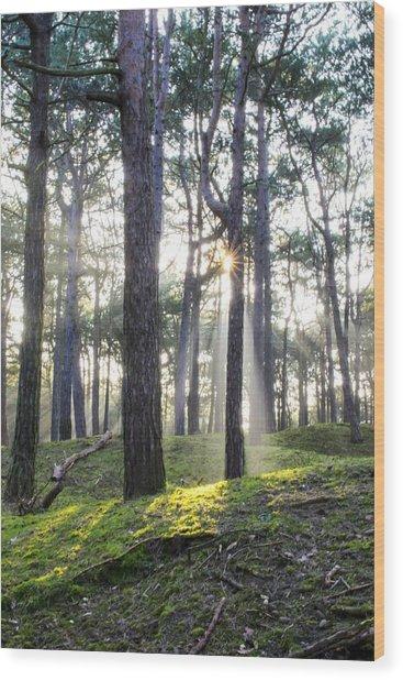 Sunlit Trees Wood Print
