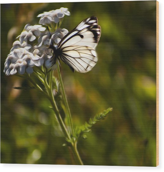 Sunlit Wings Wood Print