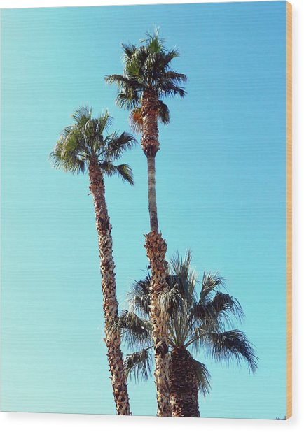 Sunny Afternoon Wood Print by Dietmar Scherf