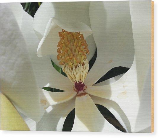 Sunny And Shy Magnolia Wood Print