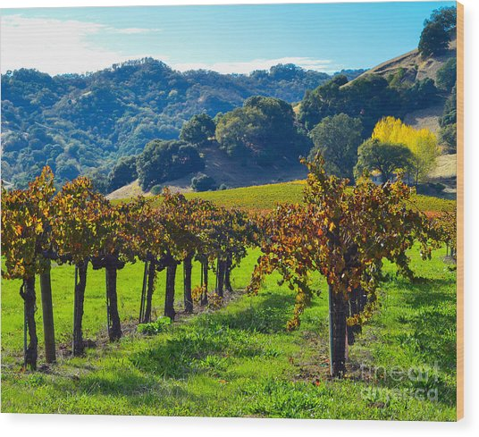 Sunny Autumn Vineyards Wood Print