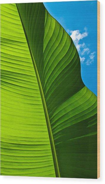 Sunny Banana Leaf Wood Print