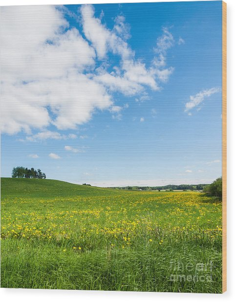 Sunny Day At The Fields Of Gold Wood Print