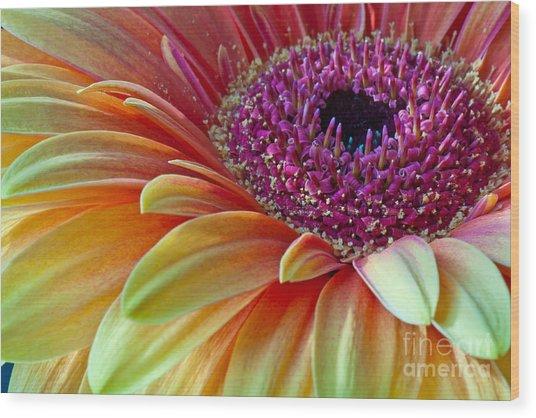 Sunny Gerber 2012 Wood Print