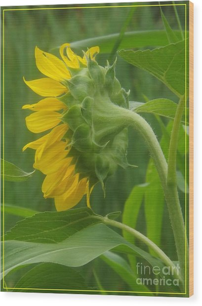 Sunny Profile Wood Print