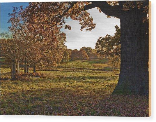 Sunny Richmond Autumn Wood Print