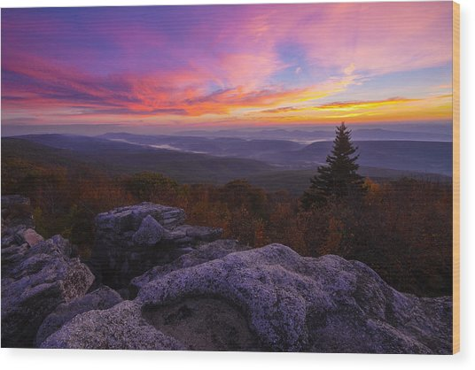 Sunrise At Dolly Sods In West Virginia Wood Print