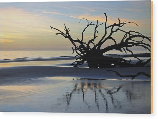 Sunrise At Driftwood Beach 6.6 Wood Print