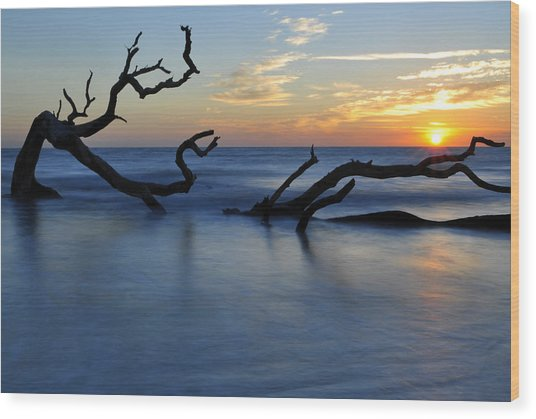 Sunrise At Driftwood Beach 7.3 Wood Print
