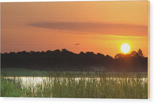Sunrise At Lakewood Ranch Florida Wood Print