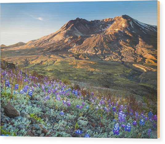 Sunrise At Mount St. Helens Wood Print