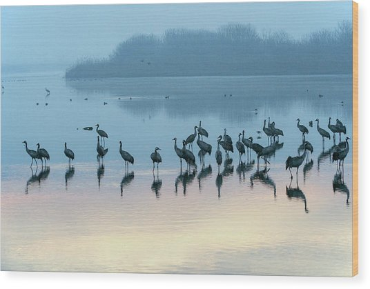 Sunrise Over The Hula Valley Israel 5 Wood Print