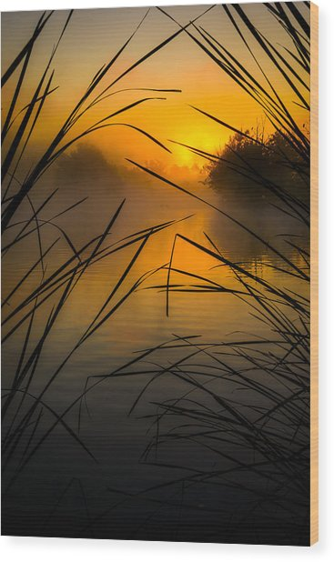 Sunrise At The Sepulveda Dam Wildlife Reserve Wood Print