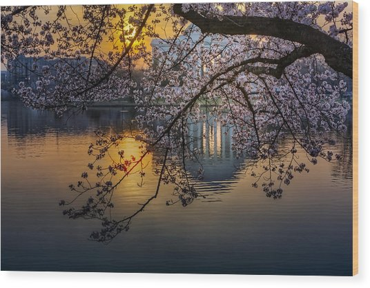 Sunrise At The Thomas Jefferson Memorial Wood Print