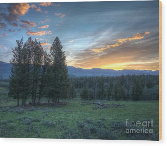 Sunrise Behind Pine Trees In Yellowstone Wood Print