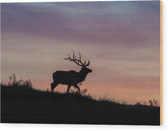 Sunrise Bull Wood Print
