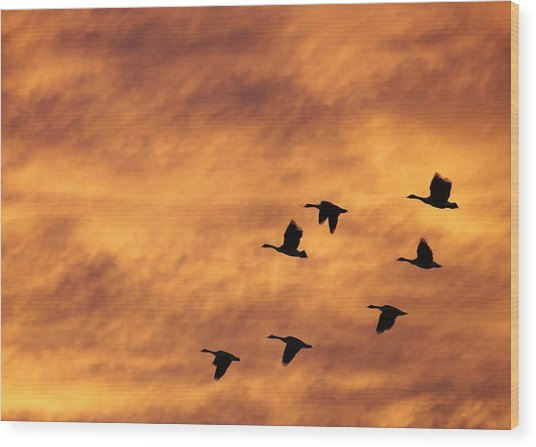 Sunrise Flight 2 Wood Print