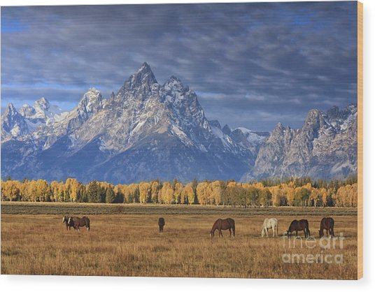 Sunrise Grazing Wood Print