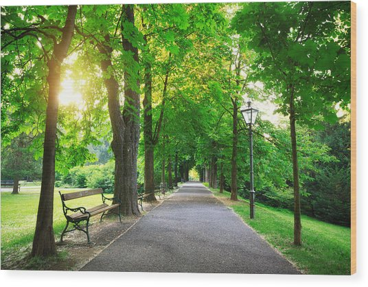Sunrise In A Green Park Wood Print by Borchee