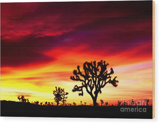 Sunrise In Joshua Tree Nat'l Park Wood Print