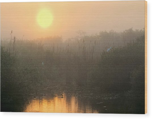 Sunrise In The Everglades Wood Print