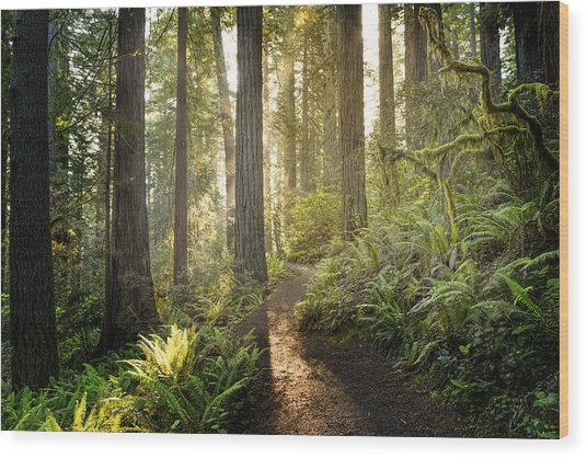 Sunrise In The Redwoods Wood Print by HadelProductions