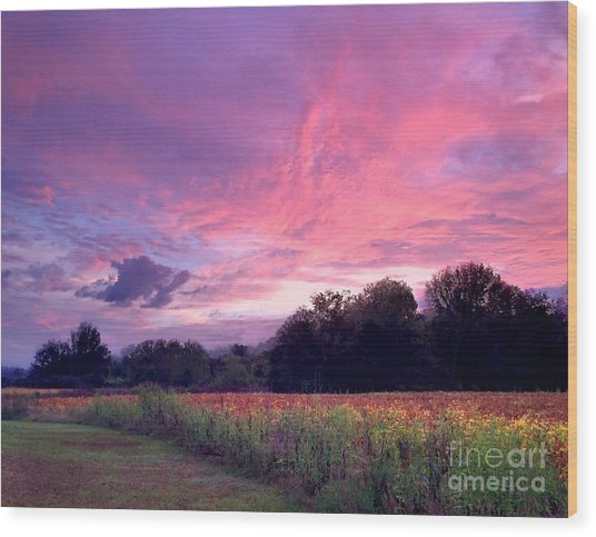 Sunrise In The South Wood Print