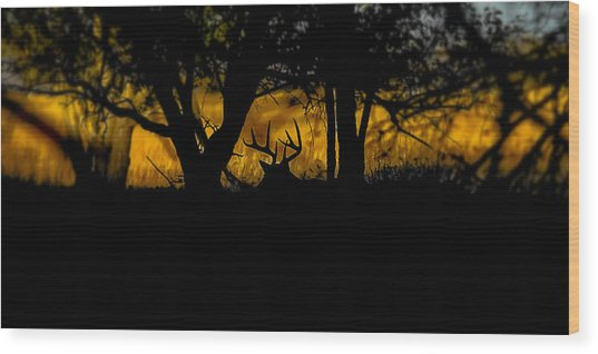 Sunrise In The Timber Wood Print